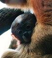 Proboscis Baby.jpg