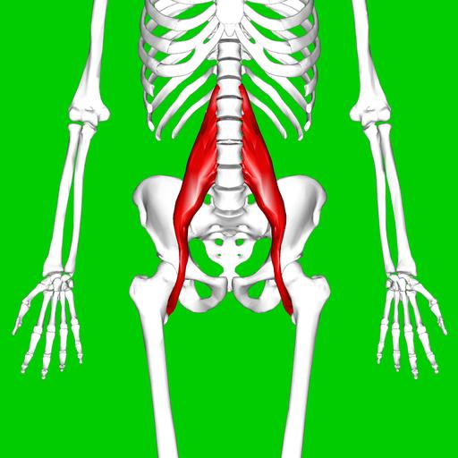 Psoas major muscle11
