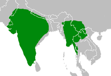 Ptyonoprogne concolor map.png