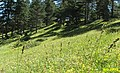 Puşulu - sapaca - panoramio.jpg