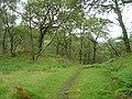 RSPB Reserve Glenborrodale - geograph.org.uk - 56418.jpg