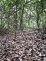 Rain forest 20.jpg