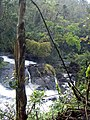 Rainforest 4 - Atherton Tableland, Queensland, Australia.jpg