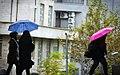 Rainy day of Tehran - 20 November 2011 33.jpg
