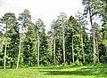 Ramensky District, Moscow Oblast, Russia - panoramio - Andris Malygin (18).jpg