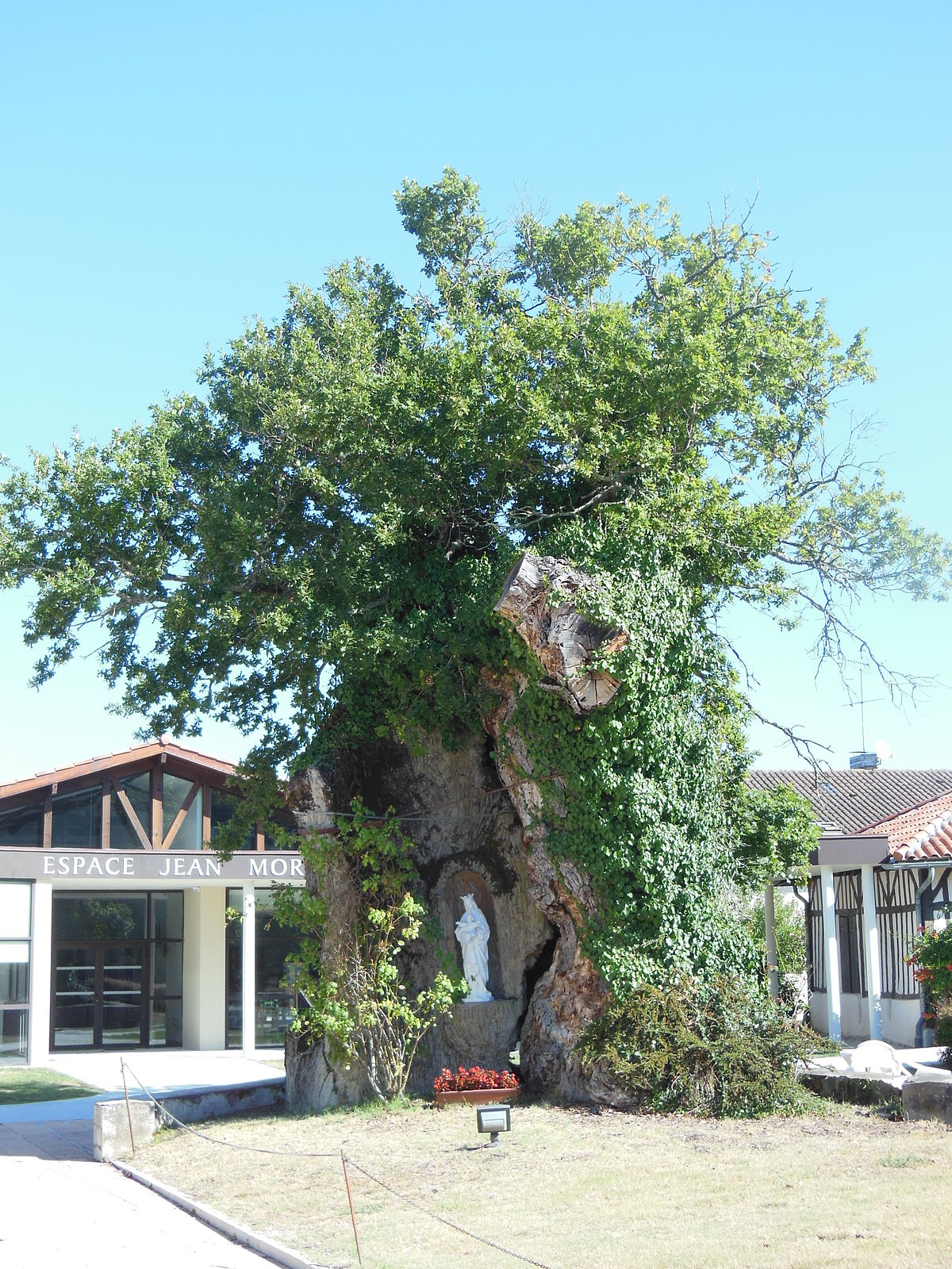 Chêne de Saint-Vincent-de-Paul — Wikipédia