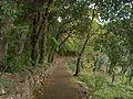 Rapallo-IMG 1124.JPG