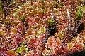 Red moss 2.jpg