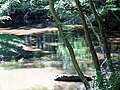 Reflection Crabtree Creek Company Mill Trail Umstead NC SP 0048 (3582938559).jpg