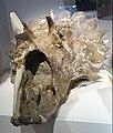 Regaliceratops Royal Tyrrell 2.jpg