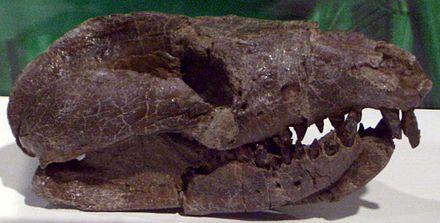 Repenomamus
