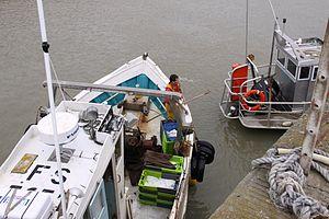 Retour de la pêche du chalutier L' Entracte II (3).JPG