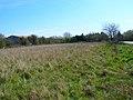 Rhee Wall, Callington Court Farm - geograph.org.uk - 394176.jpg