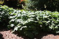 Rhododendronpark Bremen 20090513 082.JPG
