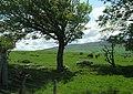 Rich Pastures. - geograph.org.uk - 434336.jpg