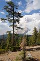 Rim Fire Yosemite August 2013 002.jpg