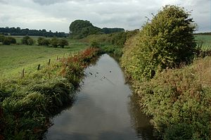 River Ver - River Ver west of St Albans