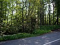 Roadside woodland near Eccleston Hall - geograph.org.uk - 803157.jpg