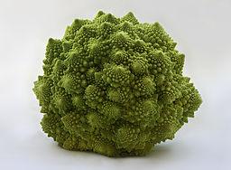 Romanesco Brassica oleracea Richard Bartz