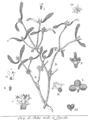 Rozier - Cours d'agriculture, tome 5, pl. 16 gui.png