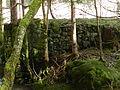 Ruines d'un ancien moulin à scie.JPG