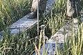 SET (Surface Elevation Table) Rod installation 8 - Cape May, NJ (15101852670).jpg