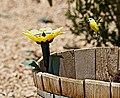 SOLAR POWERED HUMMINGBIRD (28053362696).jpg