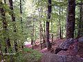 SUUCTU KAYIN ORMANLARI - panoramio.jpg