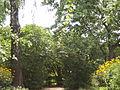Sadyba-kotsiubynskoho-chernihiv-14.JPG