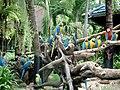 Safari World parrots.jpg