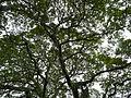 SanJuan,Batangasjf8028 06.JPG
