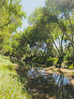 The San Pedro River near Palominas, Arizona. San Pedro River Palominas Arizona 2014.jpeg