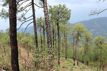 Sanawar, Himalaya.jpg