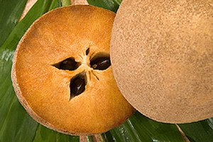 Manilkara zapota - Fruit, cross-section