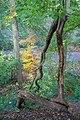 Schellenberger Wald-3374.jpg