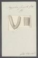 Scyphia furcata - - Print - Iconographia Zoologica - Special Collections University of Amsterdam - UBAINV0274 112 03 0008.tif