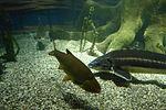 Sea Life München Fische.jpg