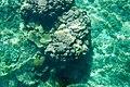 Sea coral, clear turquoise water, Bacuit Bay, El Nido, Palawan, Philippines.jpg