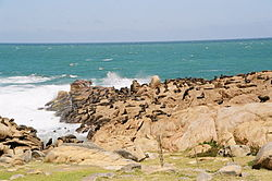 Sea lions on the rocks at Cabo Polonio, Uruguay, 2005.jpg