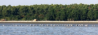 Barguna District - Image: Seabirds in Barguna Coastal area, Bangladesh (3)