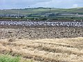 Seabirds seen on the Sussex Ouse Valley Way - geograph.org.uk - 1072328.jpg