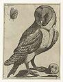 Serie van 9 vogels- Barbagianni.jpeg