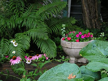 Shade Garden Ideas Perennials Front Yards