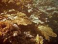 SharmKorallen.jpg
