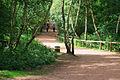 Sherwood Forest Path - geograph.org.uk - 897298.jpg