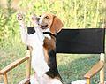 Shiloh (Kari) on director's chair.jpg