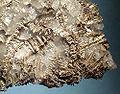 Silver-139590.jpg