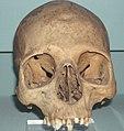 Skull of Khety.jpg