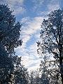 Sky'y snow - panoramio.jpg