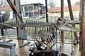 Slottsfjellsmuseet Museum Hvalhallen (Whale Hall) Tønsberg, Norway. Hvalskjeletter (Old skeletons) Spekkhogger (Killer whale Orcinus orca) Osebergskipet (Oseberg viking ship replica) Inngangsparti (Museum entrance) etc 2020-01-21 2305.jpg